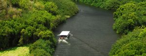 Enjoy A Cruise Down The Wailua River