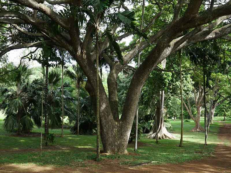 McBryde-National-Tropical-Botanical-Garden-1