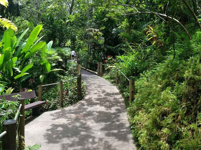 McBryde-National-Tropical-Botanical-Garden-3